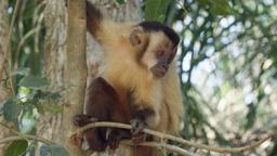 Il giardino delle scimmie