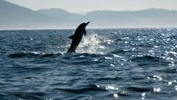 Un mostro di Marlin