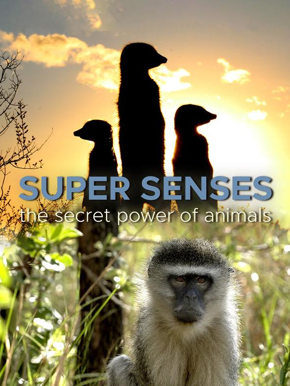SUPER SENSES: THE SECRET POWER OF ANIMALS