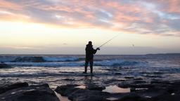La territorialità e riproduzione nei pesci
