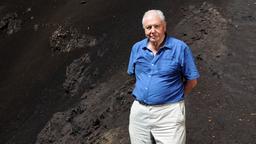 David Attenborough - Alla conquista del cielo - Stag. 1 Ep. 3