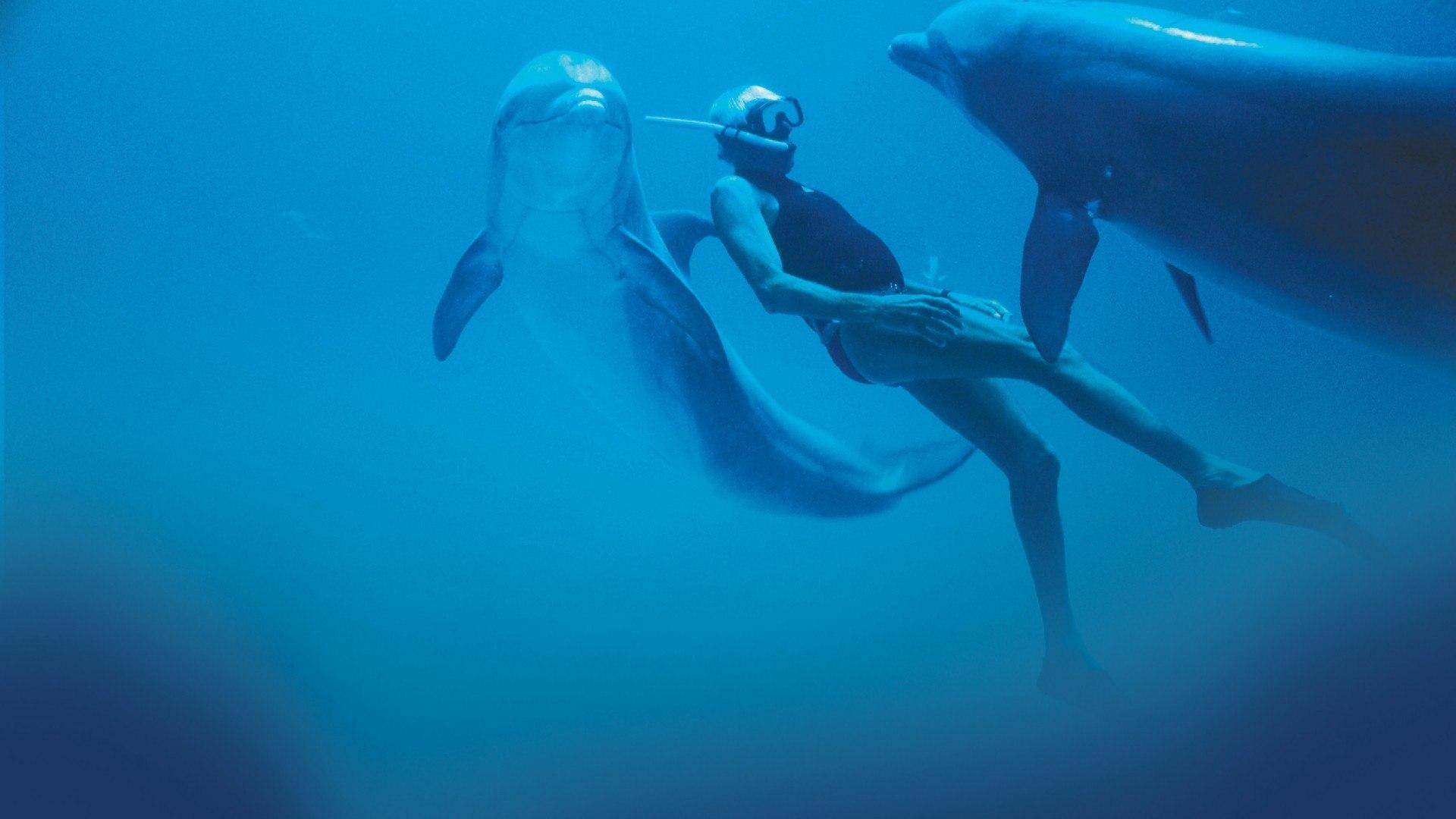 Sky Documentaries HD Dolphin Man - L'uomo delfino