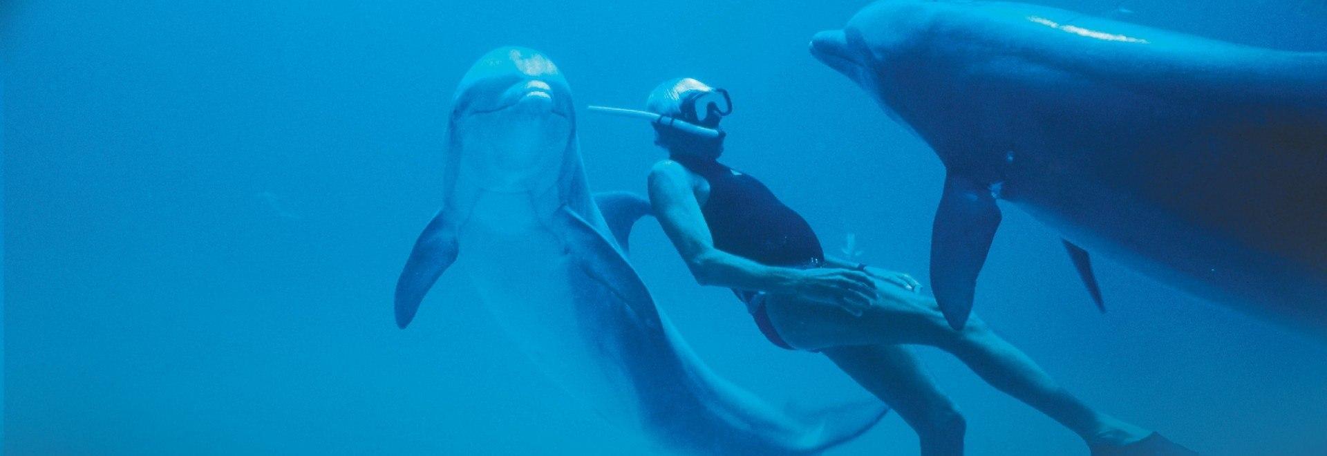 Dolphin Man - L'uomo delfino