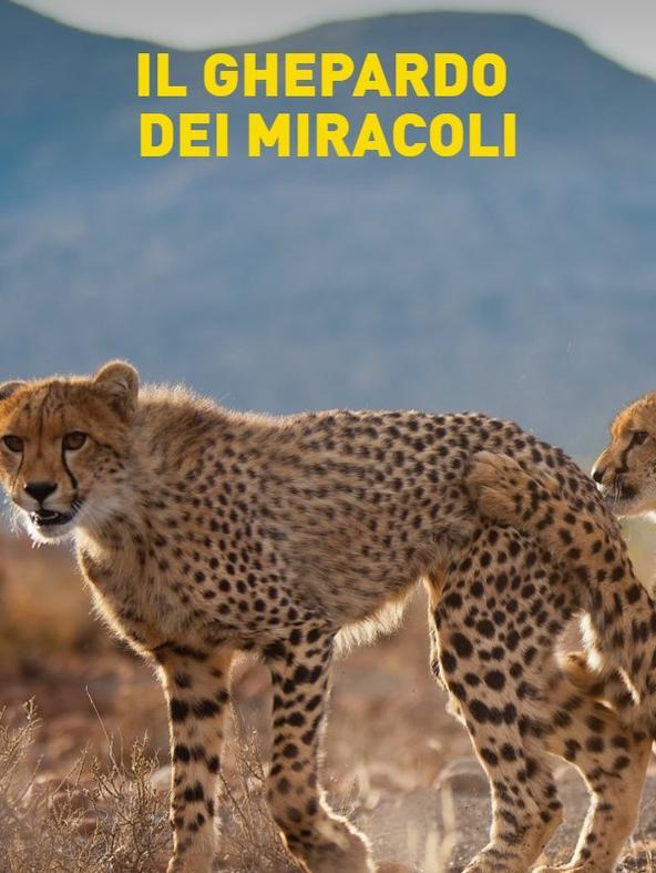 Il ghepardo dei miracoli