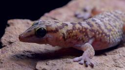 Il Kalahari