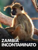 Zambia incontaminato