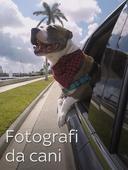 Fotografi da cani