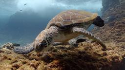 L'ereditàdi una tartaruga