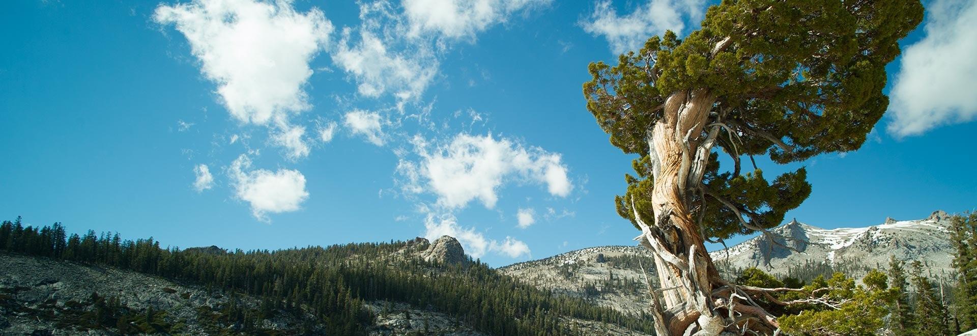 Yellowstone e Yosemite