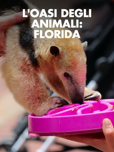S1 Ep6 - L'oasi degli animali: Florida