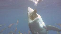 Sopravvivere agli squali