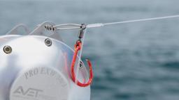 L'alfabeto del tonno rosso