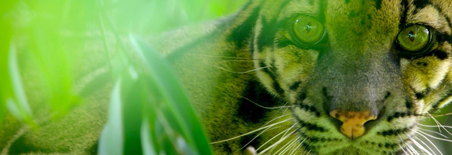 L'India dei leopardi