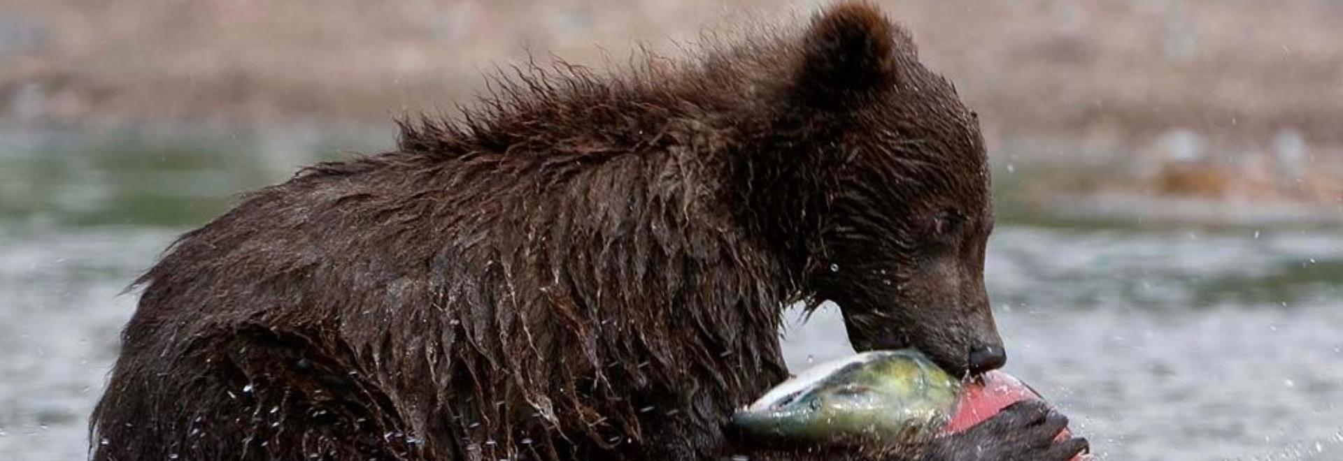 Russia: mare selvaggio