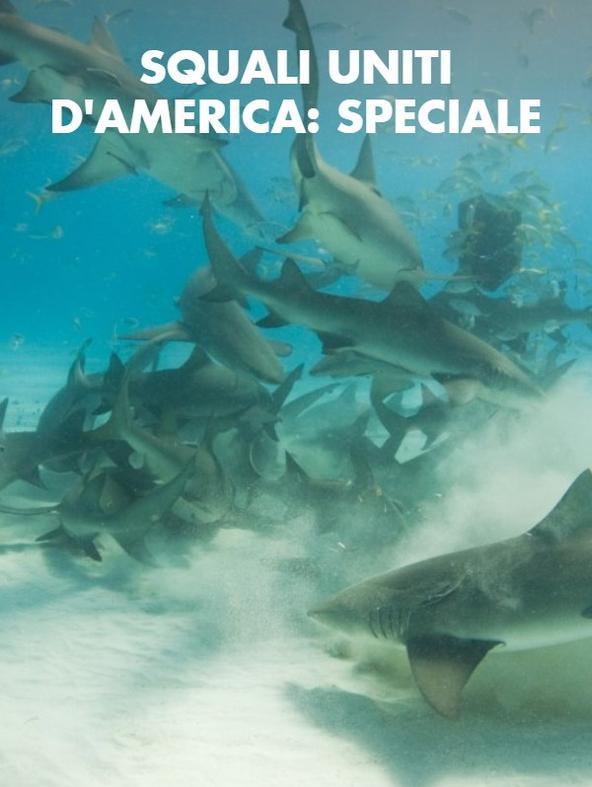 Squali Uniti d'America: speciale