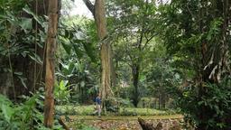 Orto botanico di Bogor