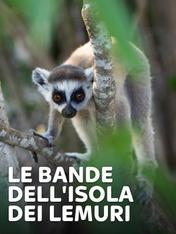 S1 Ep4 - Le bande dell'isola dei lemuri