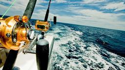 Traina con il vivo ai grandi pelagici