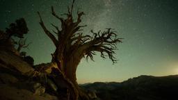 Vite nello Yosemite