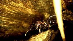 Una vespa che spavento!