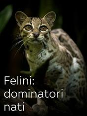 S1 Ep1 - Felini: dominatori nati