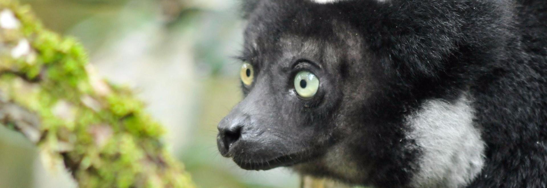 Madagascar: l'isola dei Lemuri