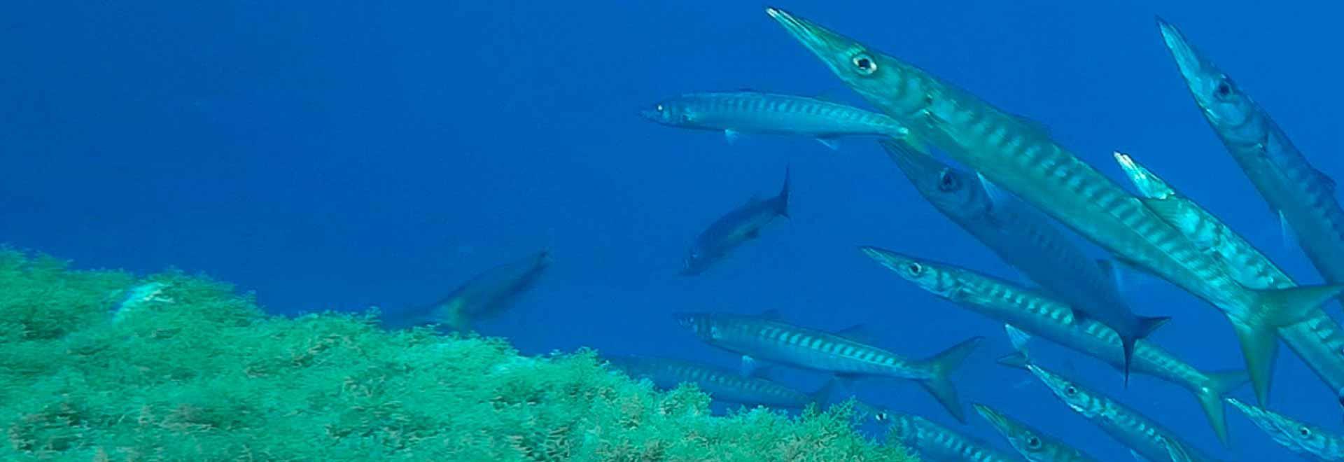Nel mare di Cabo Verde. 1a parte