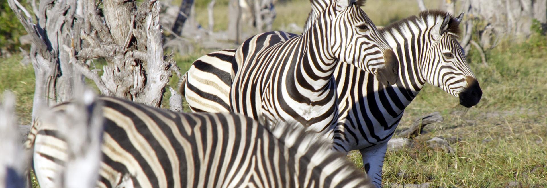 Le grandi oasi africane - Okavango