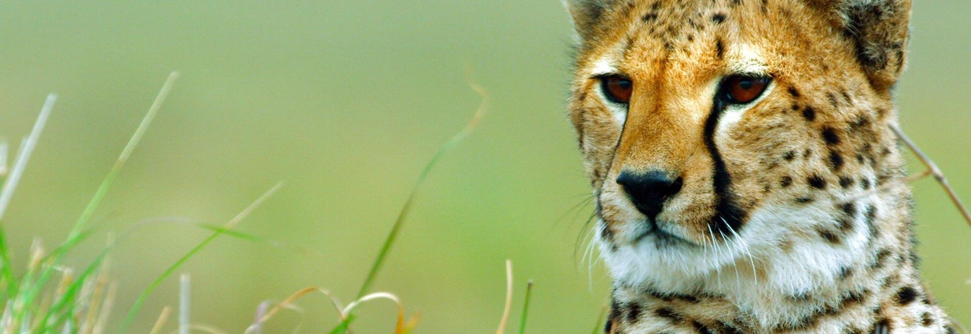 I grandi cacciatori della natura