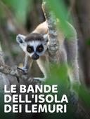 Le bande dell'isola dei lemuri