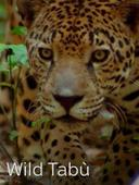Wild Tabù: strani per natura