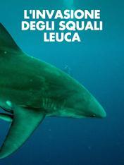 L'invasione degli squali leuca