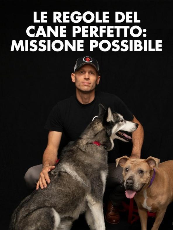 Le regole del cane perfetto: missione possibile
