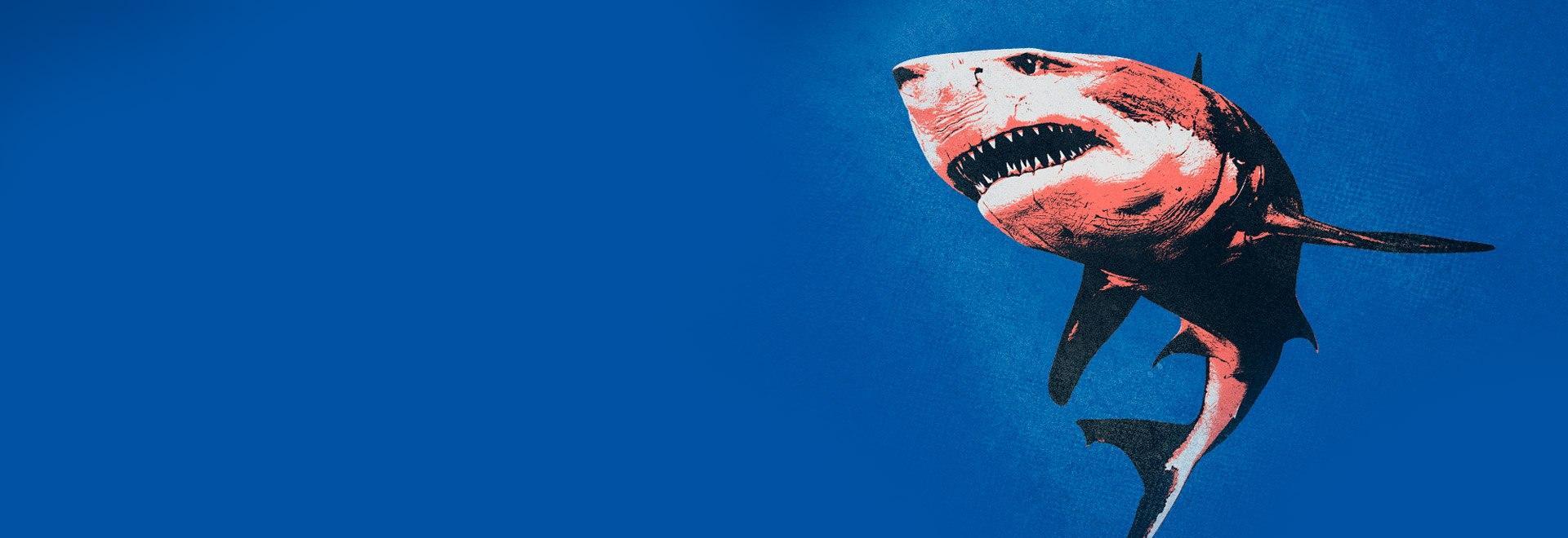 Shark Week Package
