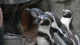 Pinguini problematici