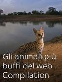 Gli animali più buffi del web Compilation