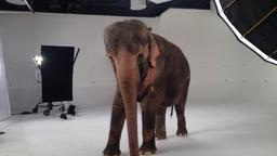 Elefanti ed oranghi