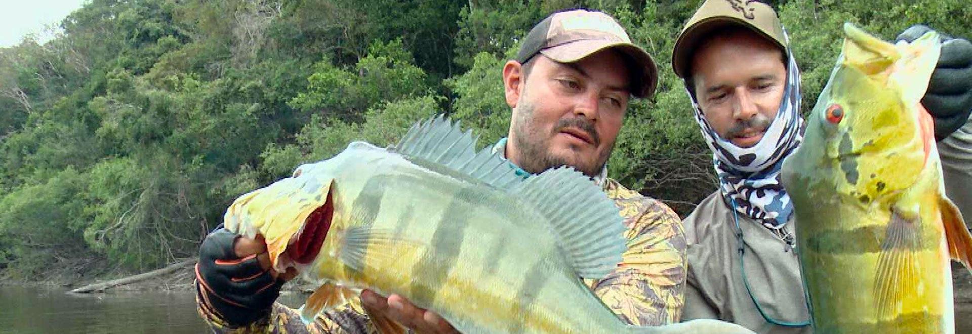Spedizione in Colombia: peacock giganti