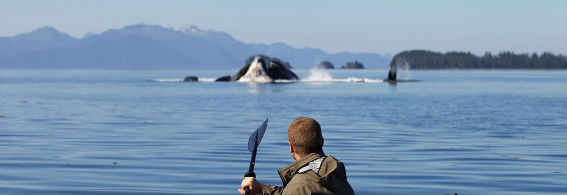 L'isola delle orche