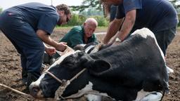 Caccia al toro