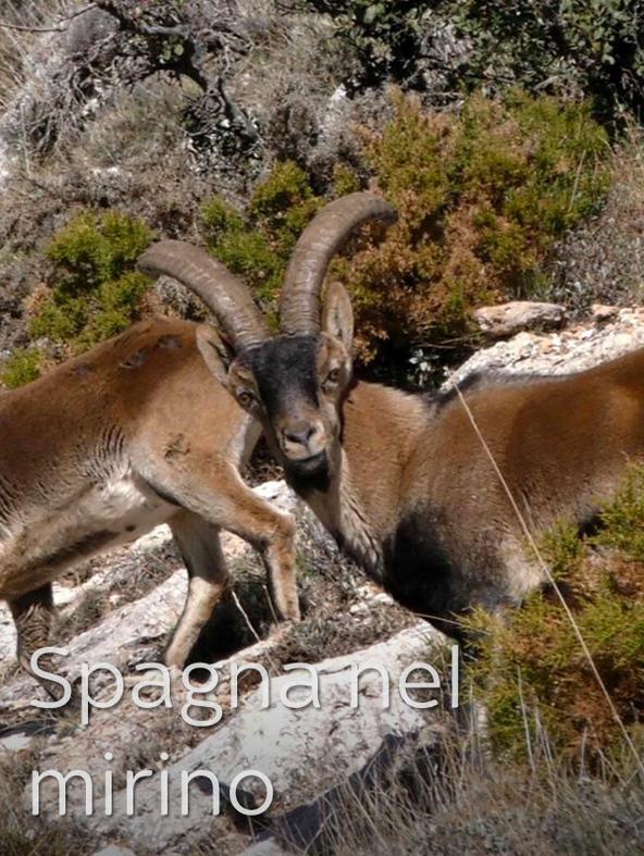 Sierra Nevada - Laboratorio del Macho Montes