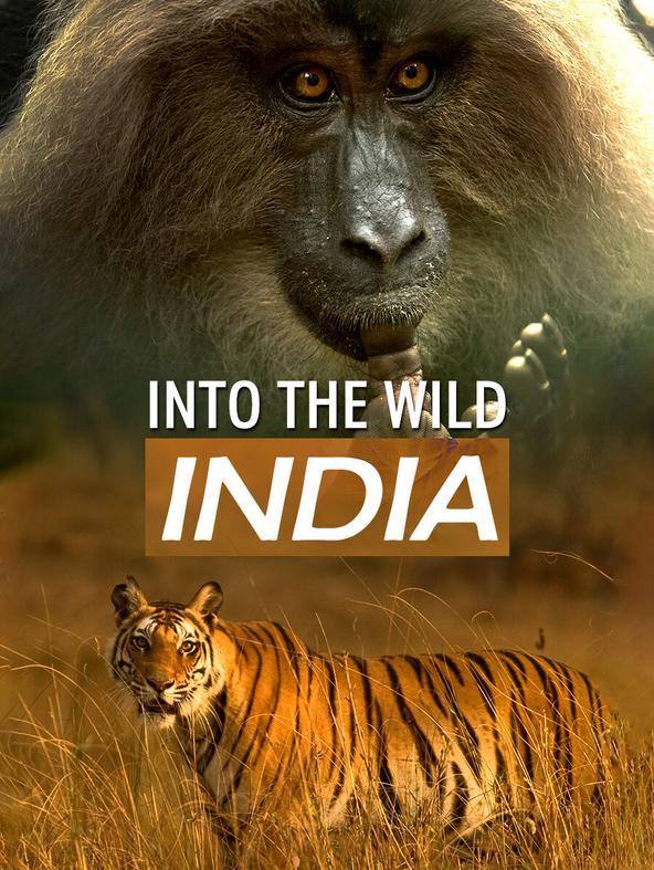 INTO THE WILD: INDIA