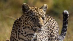 Botswana: scorre il sangue