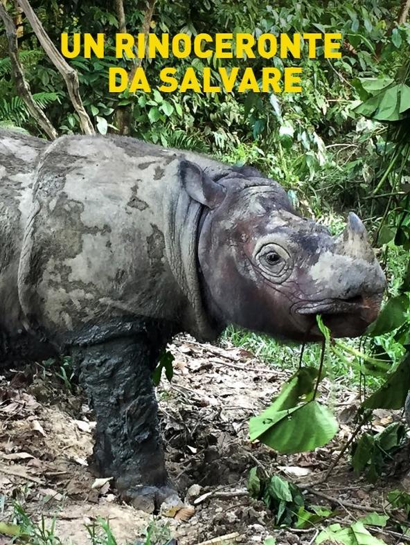 Un rinoceronte da salvare