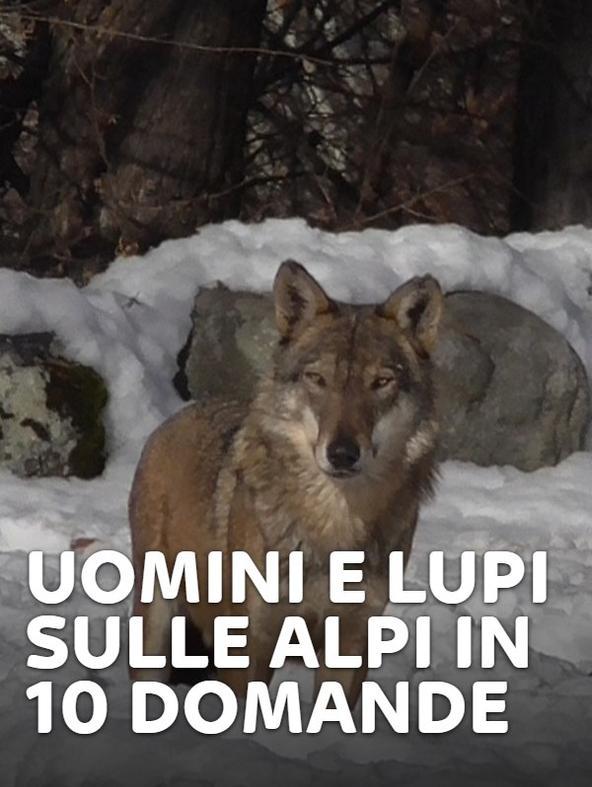 S1 Ep2 - Uomini e lupi sulle Alpi in 10 domande