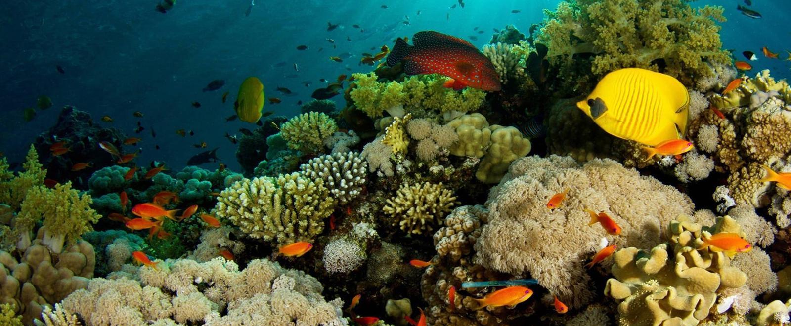 L'affascinante barriera corallina: Prede e predatori