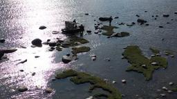 Isola di Kihnu - Gli acquatici del grande nord