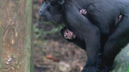 Baby animals I-II