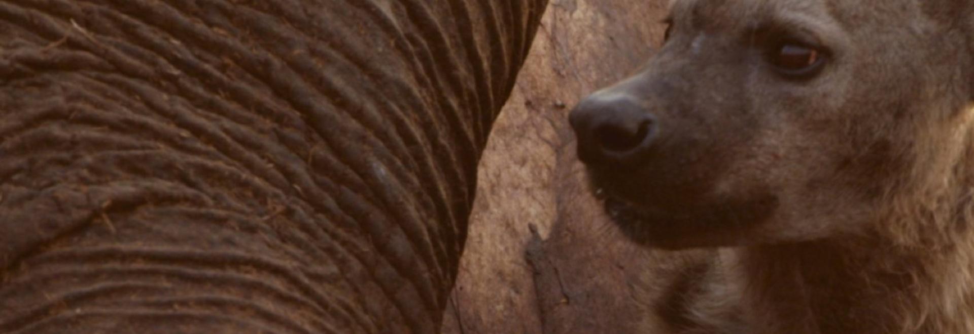 Gli animali più pericolosi: Botswana