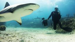 Le profondità oceaniche
